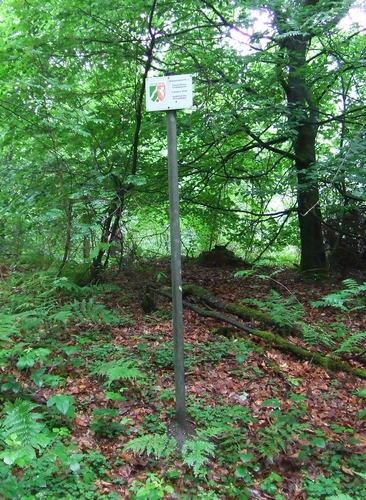 Grabhügelfeld im Lohmarer Wald