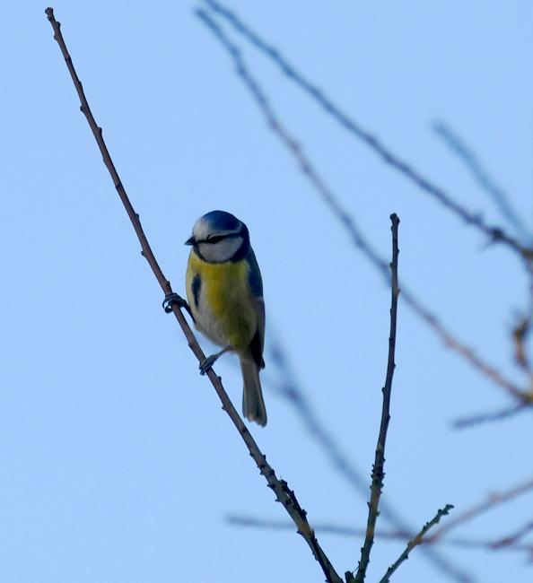 Den Vögeln des Waldes lauschen und die Seele baumeln lassen