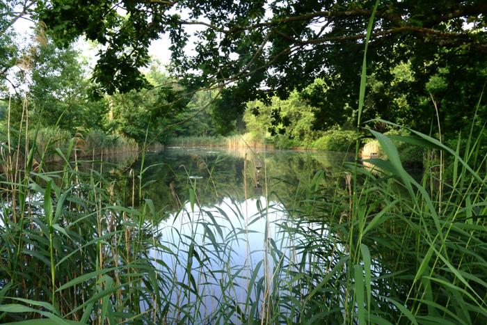 Stallberger Teich