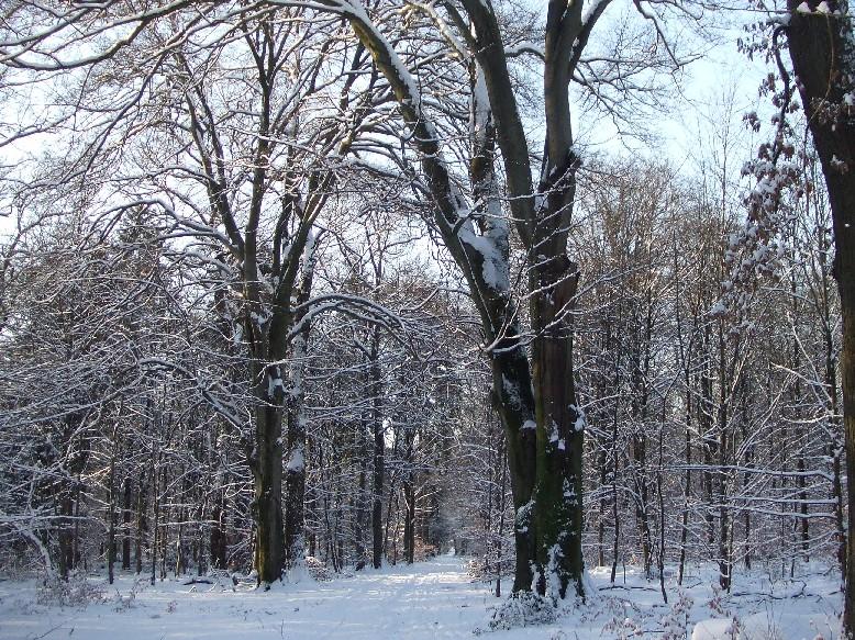 Schneefälle im Königsforst wurden zur Seltenheit