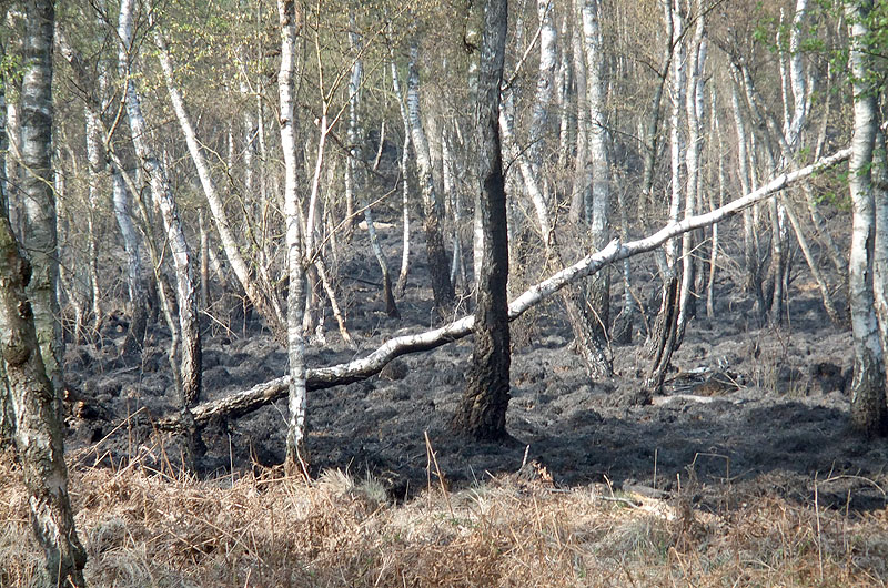 Wenige Tage nach dem Feuer, mit Teleobjektiv vom Marienbrunsheideweg aus fotografiert