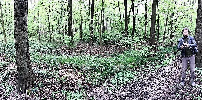Holger Sticht über die Vegetation im Traubenkirschen-Eschenwald