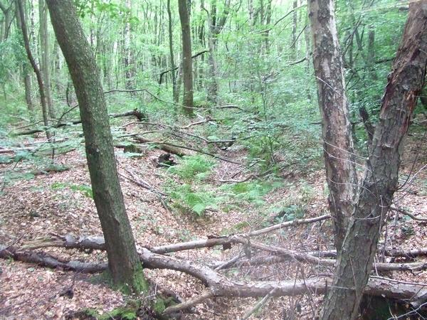 Naturnahe Waldbestände im südlichen Frankenforst