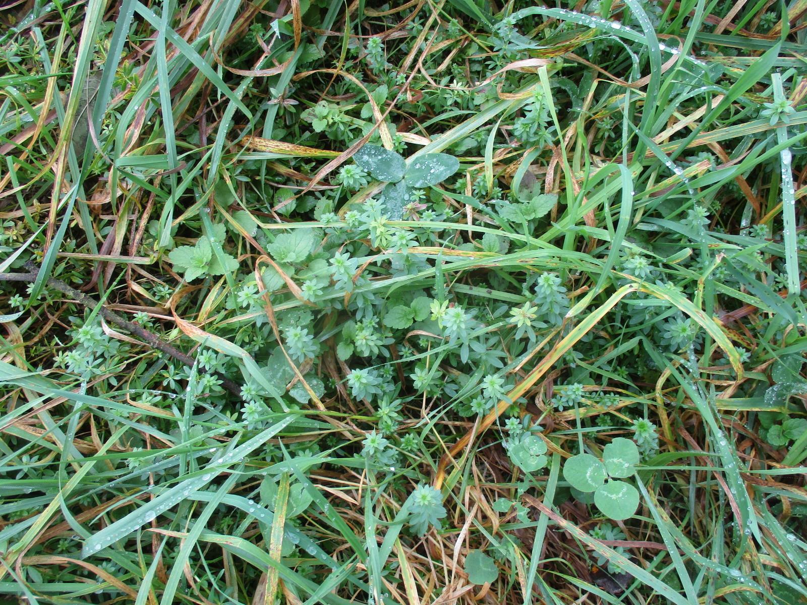 Mehr als Gras: Lebensraum Schlodderdeichs Wiese