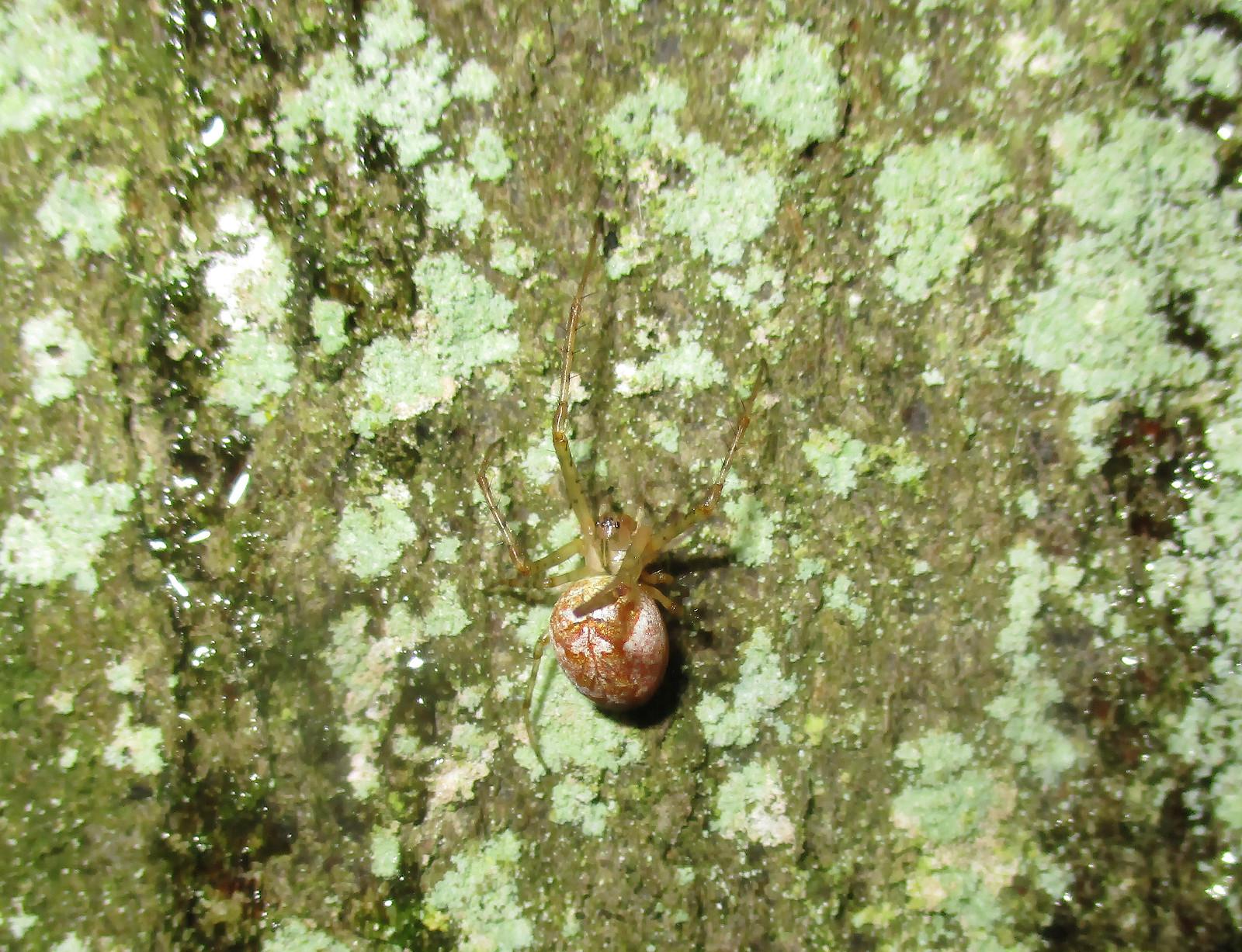 Baumstämme bieten einfache Möglichkeiten zur Naturbeobachtung (hier: Kugelspinne)