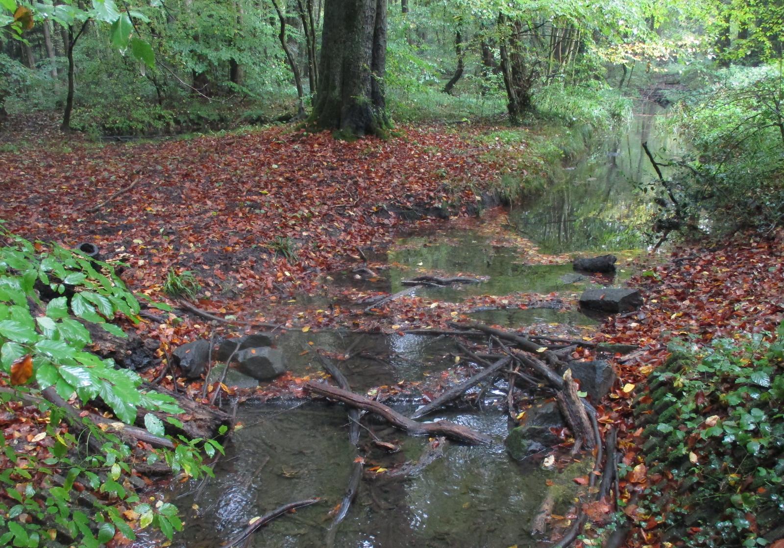Verzahnung von Land und Wasser im Thielenbruch