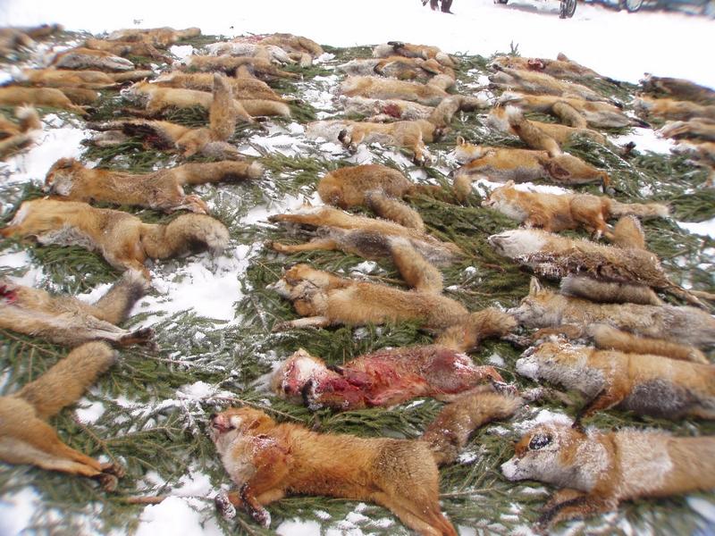 Fuchsstrecke