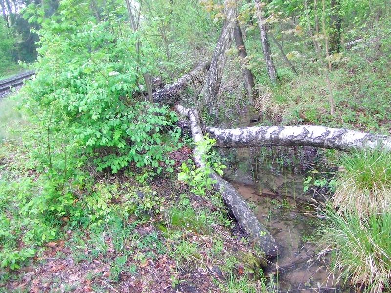 Streng geschützter Biotoptyp unmittelbar am Gleis im Thielenbruch