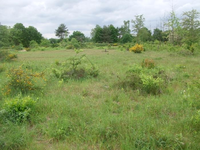 Strukturreicher, offener Lebensraum u.a. mit unbewachsenen Standorten ist überlebensnotwendig für die alllermeisten Bienenarten