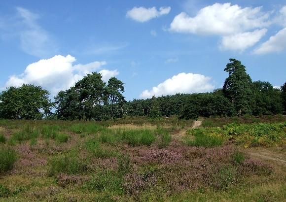 Heideflächen am Fliegenberg in der Wahner Heide
