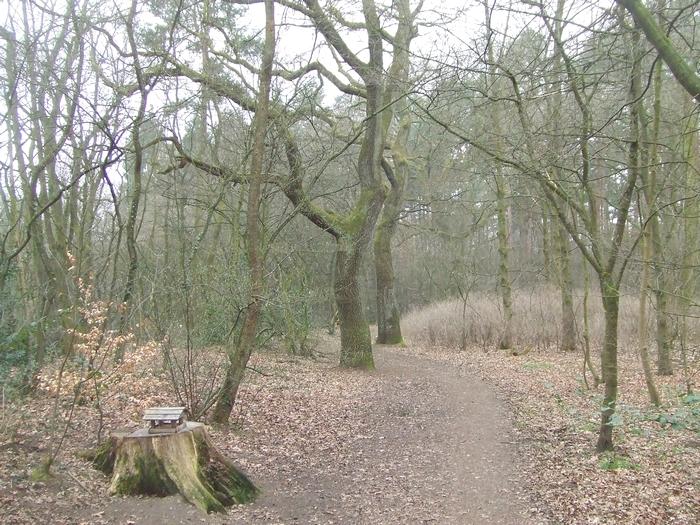 Neuenborner Busch, gefährdet durch die Firma Krüger