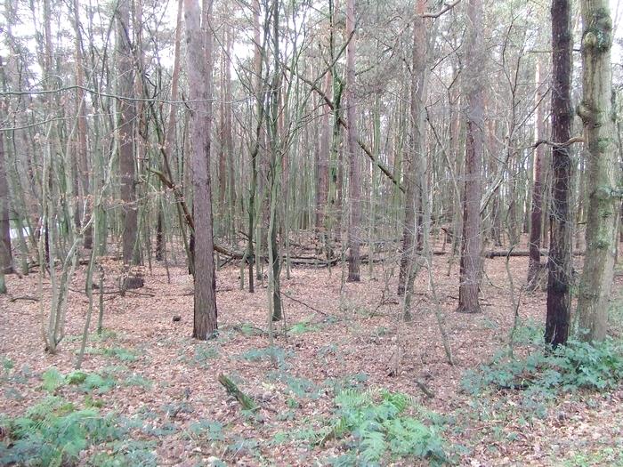 Hier soll der Kletterwald gebaut werden