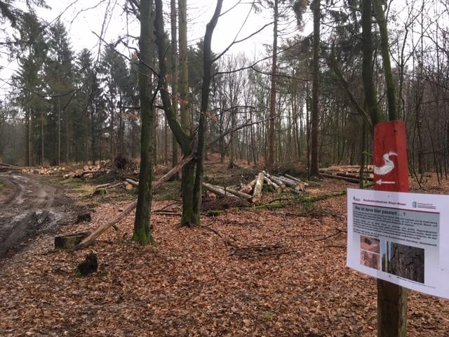 Dellbrücker Heide