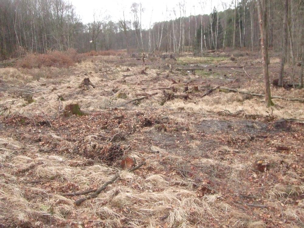 Baumfällungen für die Wiederherstellung von Heidemooren und nährstoffarmen Stillgewässern