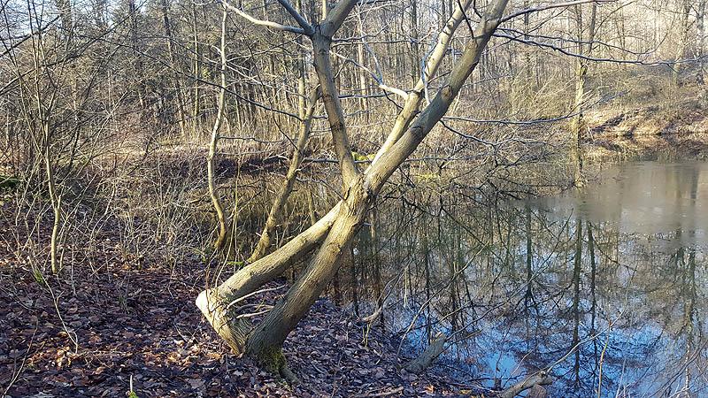 Der Uferbereich vor dem Einsatz...