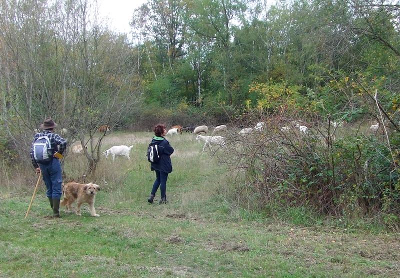 Schäfer mit Schäferhund und Naturschutzwartin