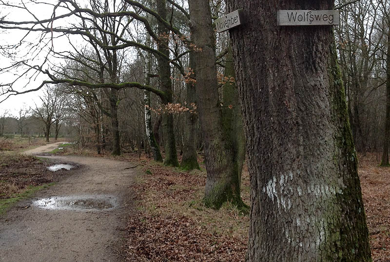 Hier lang, Isegrim! Wolfsweg im Geisterbusch, Wahner Heide