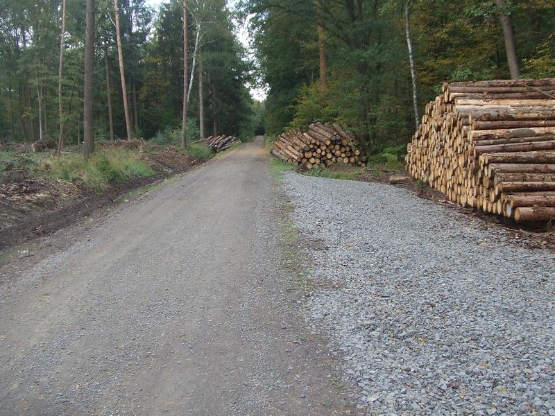 Teilversiegelter Waldboden als Holzlager im Königsforst in 2019