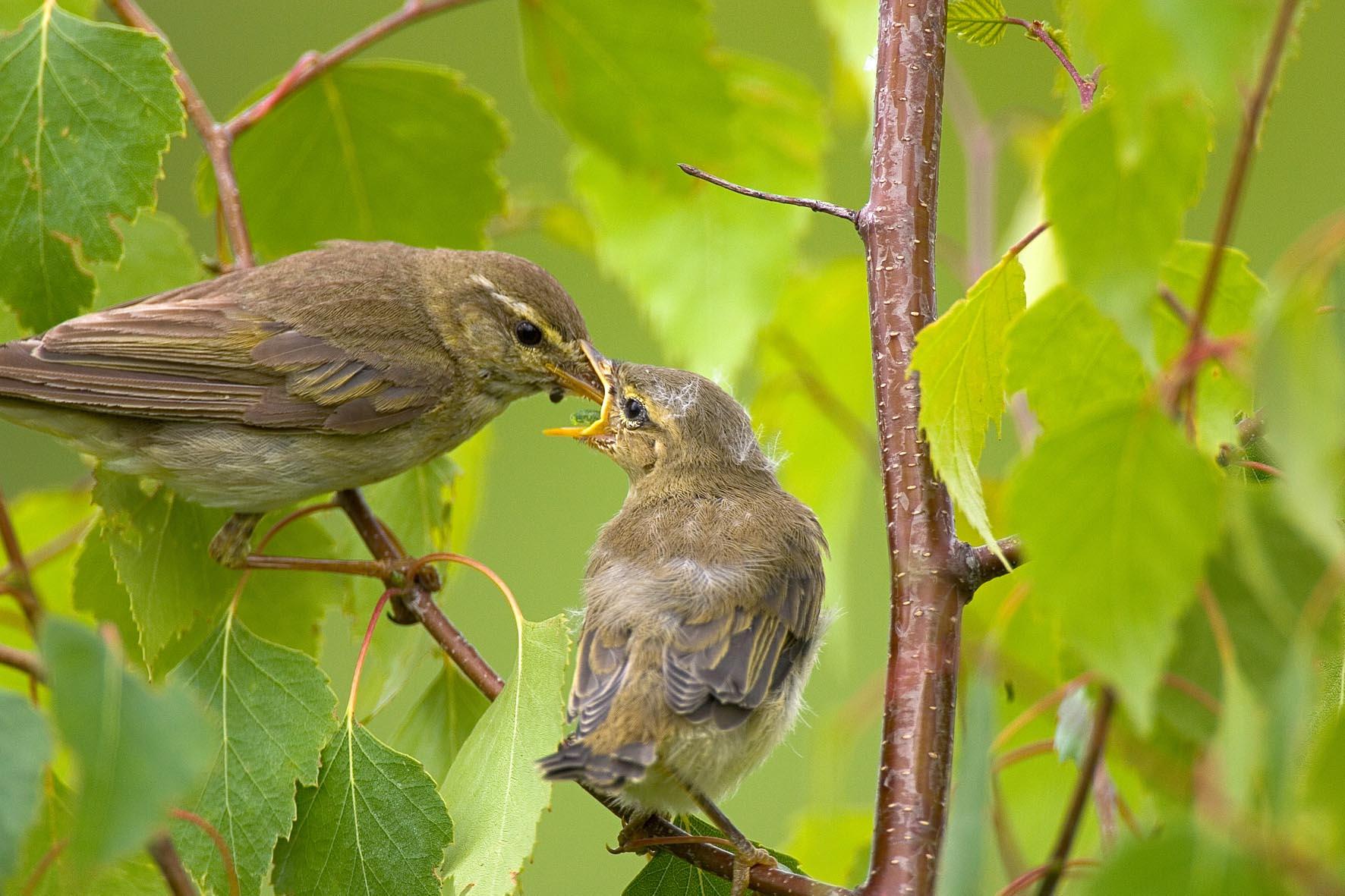 Vögel der Dellbrücker Heide