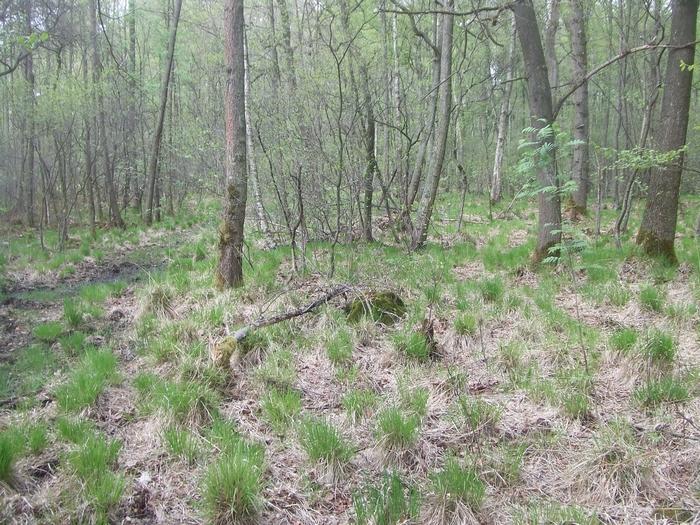 Moorreste im Dünnwalder Wald