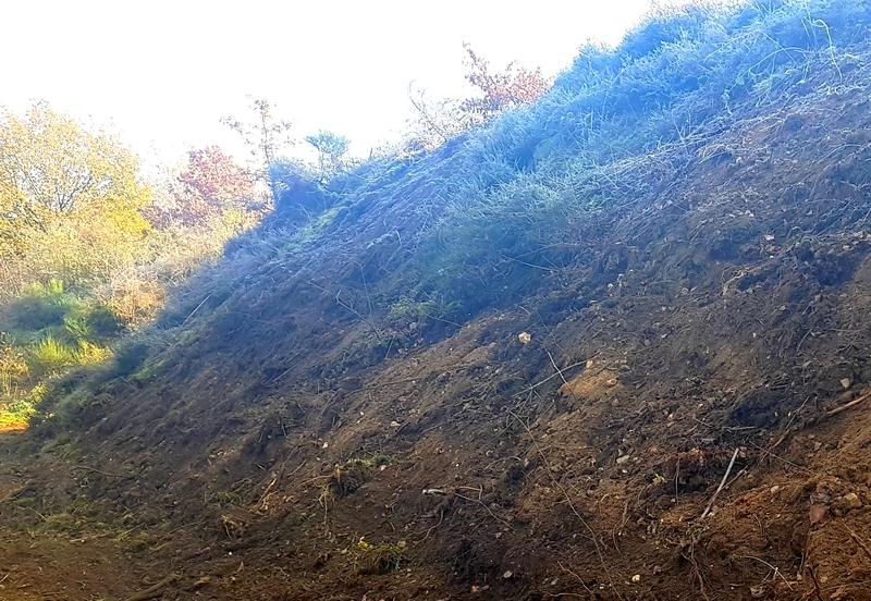Böschung mit Zwergstrauchheide und offenen Kiesflächen, auf welchen die Spätblühende Traubenkirsche entnommen wurde
