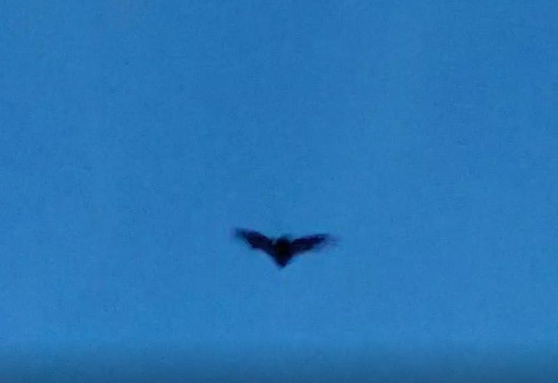 30.03.2021: Fledermaus im Königsforst