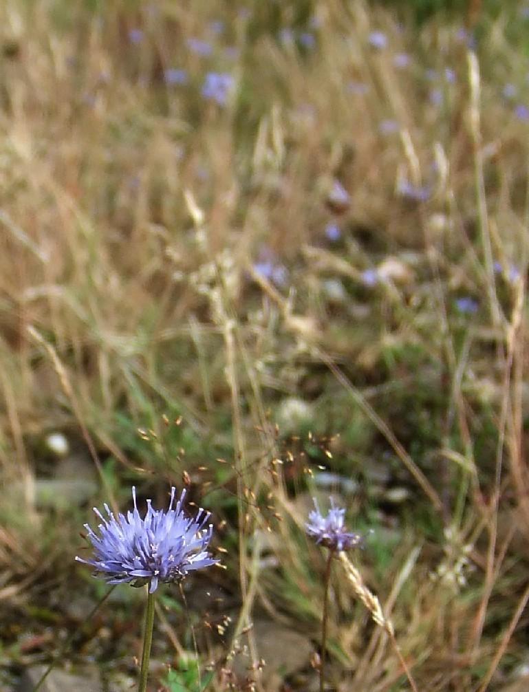Flora Dellbrücker Heide
