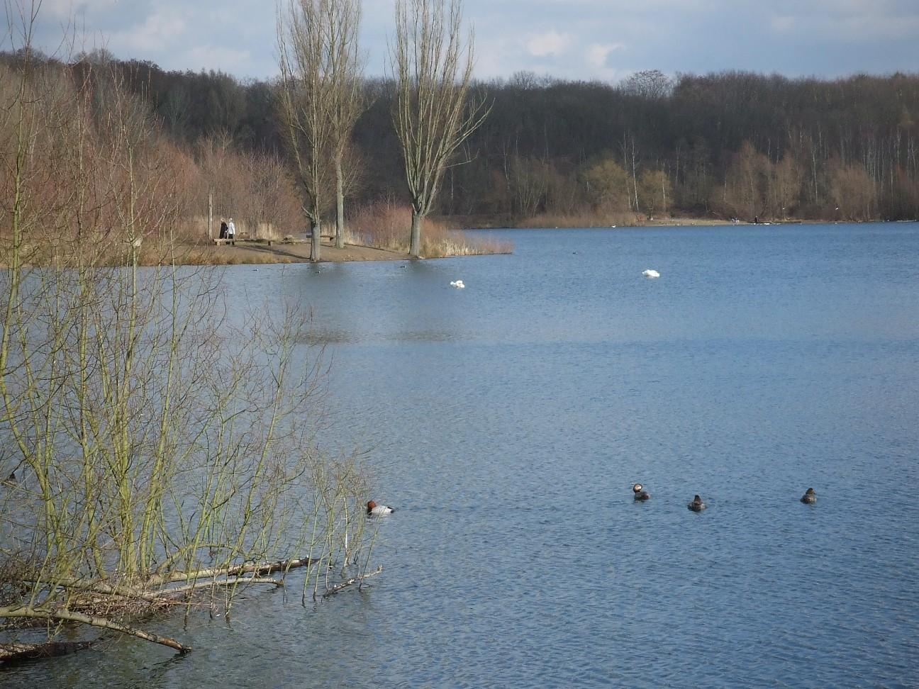 Höhenfelder See Schwimmen