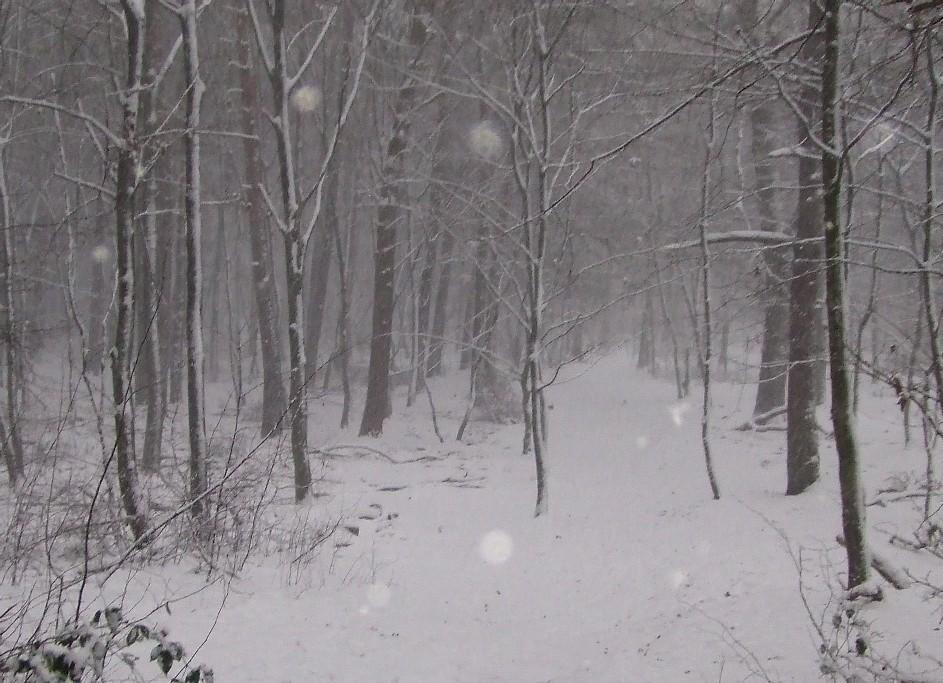 Winter im Königsforst