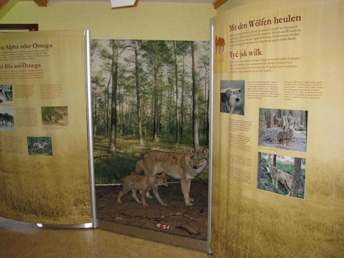 Wolfsausstellung