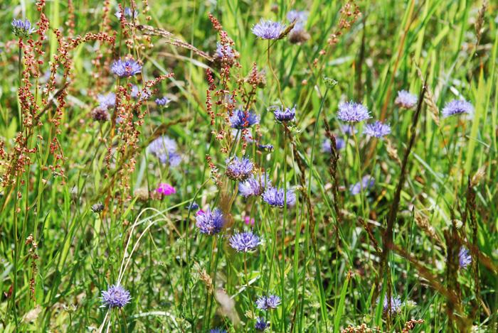 Wahner Heide, Veranstaltung Botanische Wanderung in de