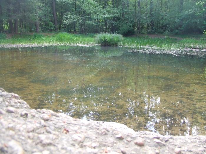 Teiche in der Schluchter Heide