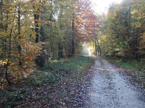 Herbstwald Auf der Maar