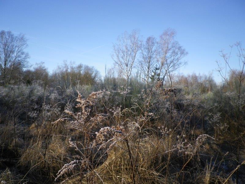 Winterimpressionen in der Dellbrücker Heide