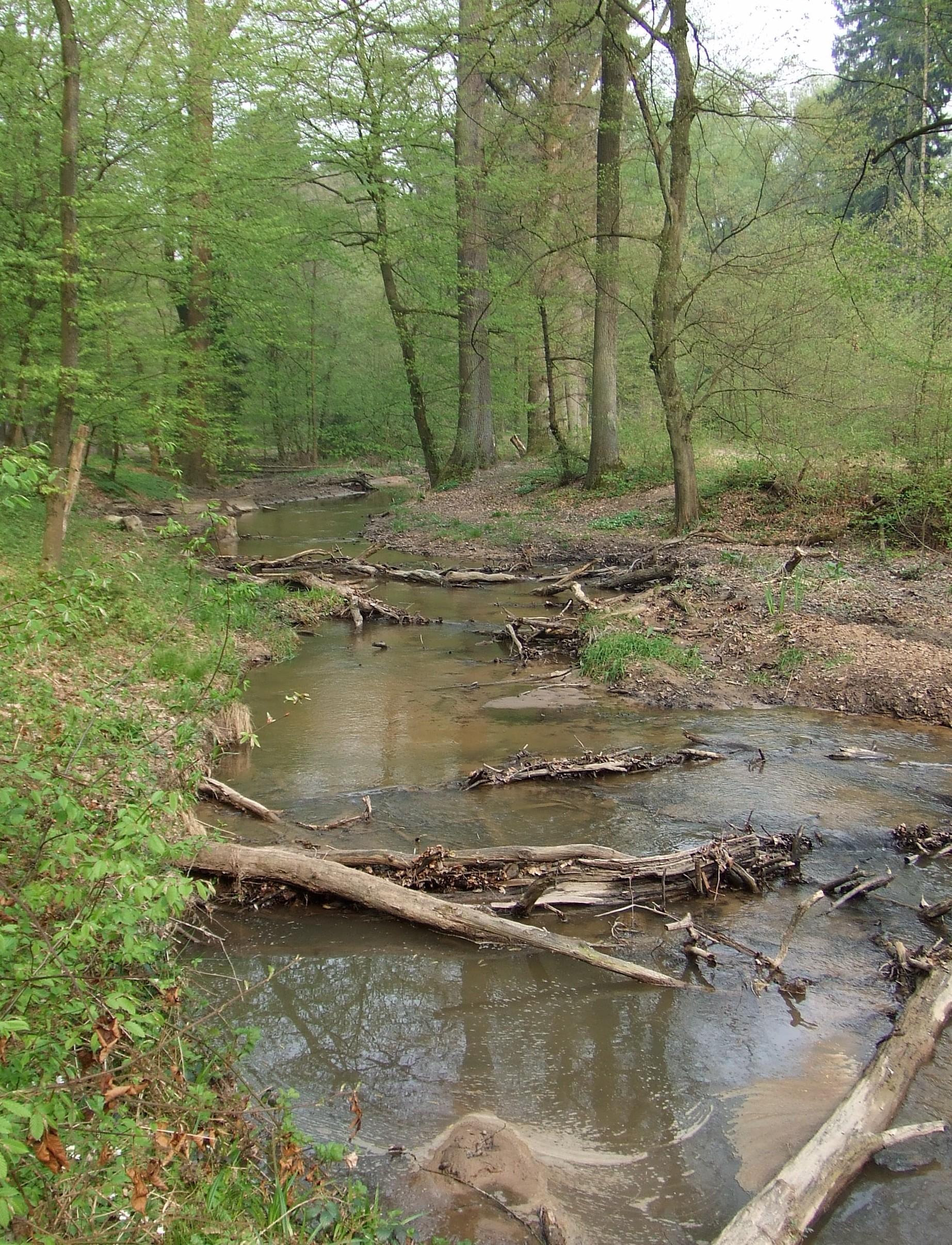 Flehbach in der Brücker Hardt