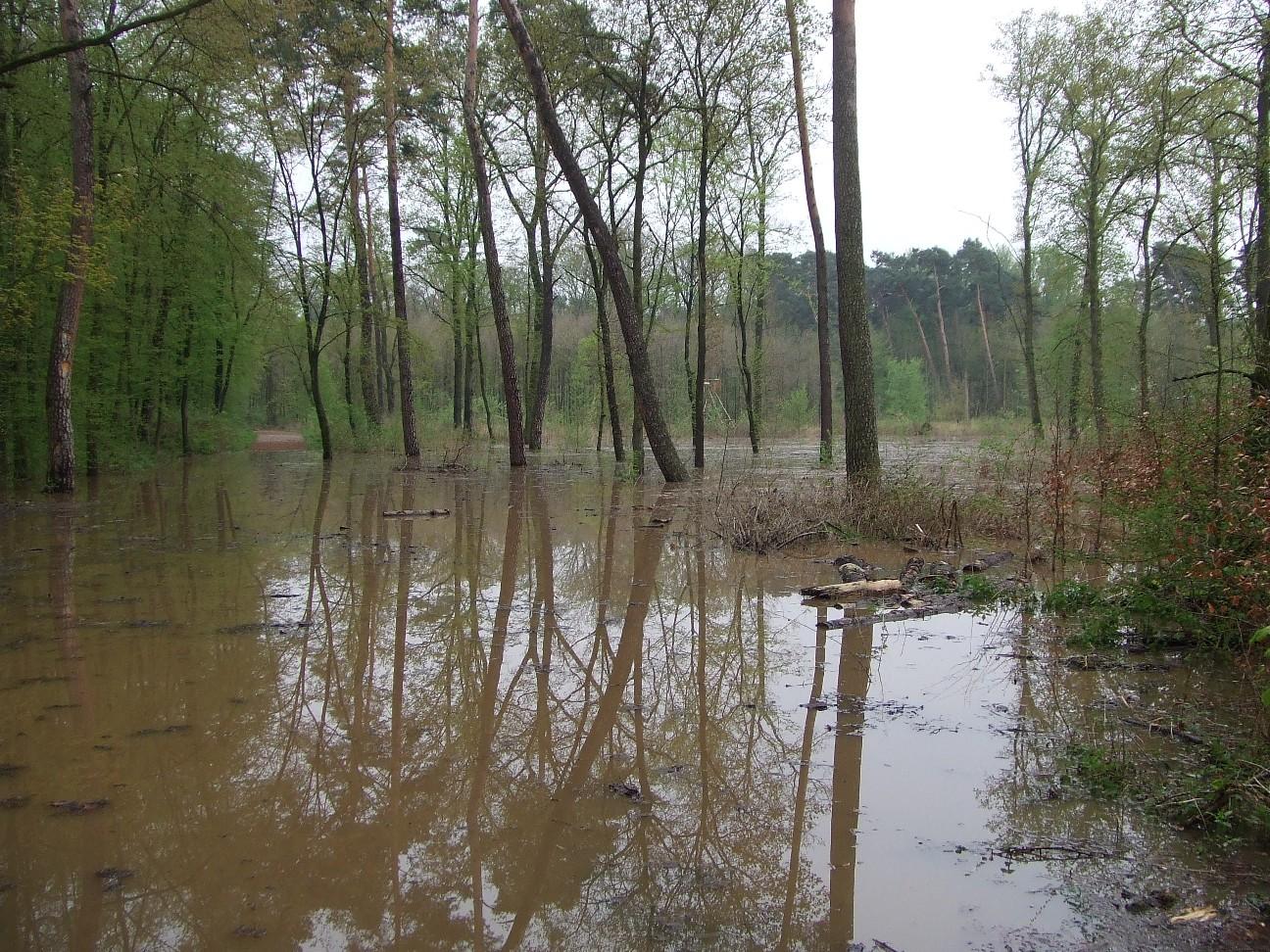 Der Flehbach darf zumindest stellenweise wieder über seine Ufer treten