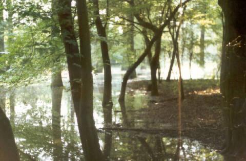 Stieleichen-Hainbuchenwald der Kurtenwaldbachaue